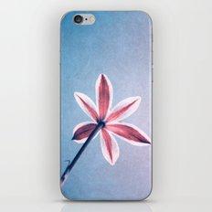 stella iPhone & iPod Skin