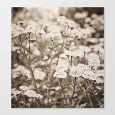 Roaming Through Wild Flower Fields Canvas Print
