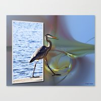 Blue Heron Strutting Out… Canvas Print