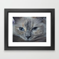Mustachioed Cat Framed Art Print