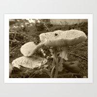 mushrooms 2016 X Art Print