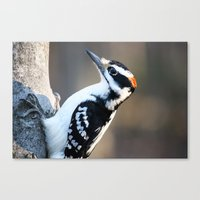 Woodpecker Canvas Print
