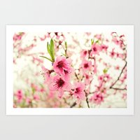 Spring Is In The Air! Art Print