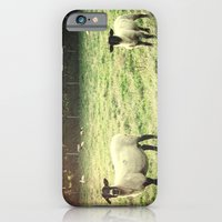 iPhone & iPod Case featuring Dedicated Followers by Elizabeth Wilson Photography