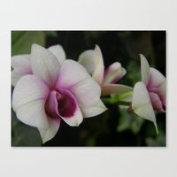 Orchids #2 Canvas Print