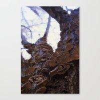 Fungi on the apricot tree Canvas Print