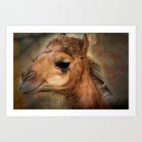 The Camel's Secret Art Print