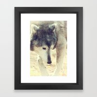 Wolfs Beauty Framed Art Print