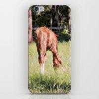 Horses Feeding In A Fiel… iPhone & iPod Skin