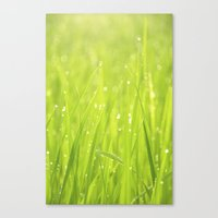 Morning Dew Canvas Print
