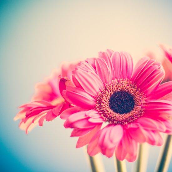 This Tornado Loves You, Pink Flower on Blue  Art Print