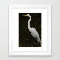 Great Egret Framed Art Print