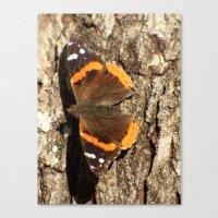 Butterfly 2016 III Canvas Print