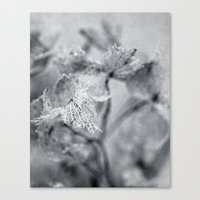 Winter Hydrangea Canvas Print