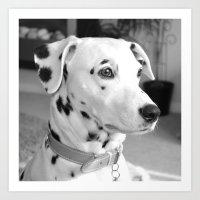 Spotty Dotty Dalmatian D… Art Print
