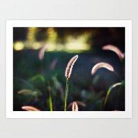 Autumn Grass II Art Print