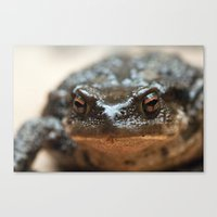 Toad 3 Canvas Print