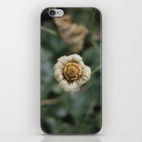 Winter Flower iPhone & iPod Skin