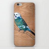 Budgerigar iPhone & iPod Skin