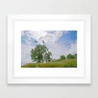 The buzzard tree Framed Art Print