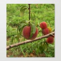 Hanging Peach Canvas Print