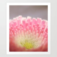 Winter Flower. Art Print