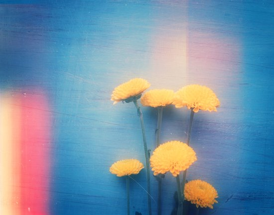 Little Yellow Flowers on a Blue Day Art Print