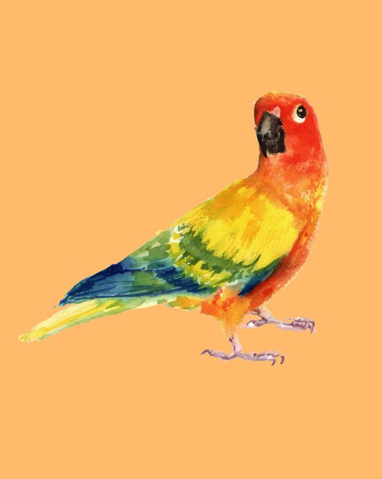 Orange Parrot Art Print