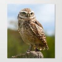 The Burrowing Owl Canvas Print