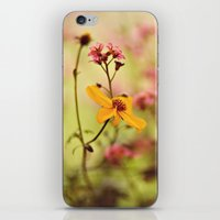 Lemon Drop Flower Box iPhone & iPod Skin