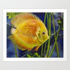 Yellow Discus Art Print