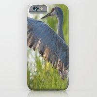 Sandhill Crane Up Close iPhone 6 Slim Case