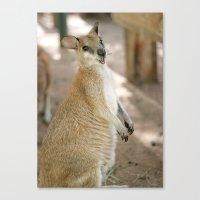 Smiling Kangaroo Canvas Print