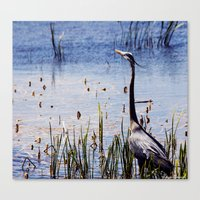 Great Blue Heron In The … Canvas Print
