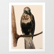 Rough-legged Hawk Art Print