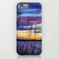 iPhone & iPod Case featuring Through the Reeds by JMcCool