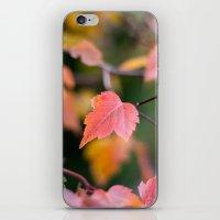 Autumn Red iPhone & iPod Skin