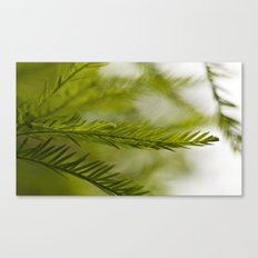 Delicate green fronds Canvas Print
