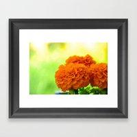 Velvet Petals Framed Art Print
