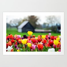 Barn and Tulips, Woodburn Tulip Festival Art Print