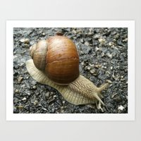 Snail Photography Art Print