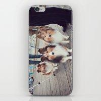 Shelties iPhone & iPod Skin
