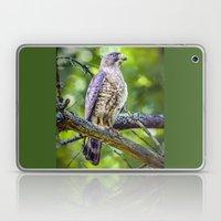 Broad wing Hawk Laptop & iPad Skin