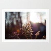 Goldenrod Light Art Print