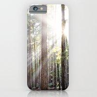 Sunburst Through the Redwoods iPhone 6 Slim Case