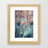 Echeveria #4 Framed Art Print