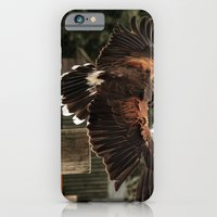Red Tailed Hawk iPhone 6 Slim Case