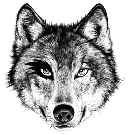 The Wolf Next Door Art Print