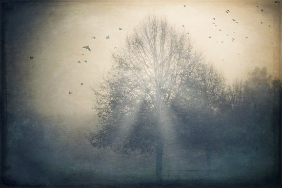 Foggy Novemberday Art Print