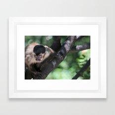 Ferocious Monkey Framed Art Print
